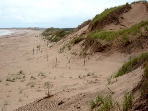 img_1892-brackley-beach-pei1