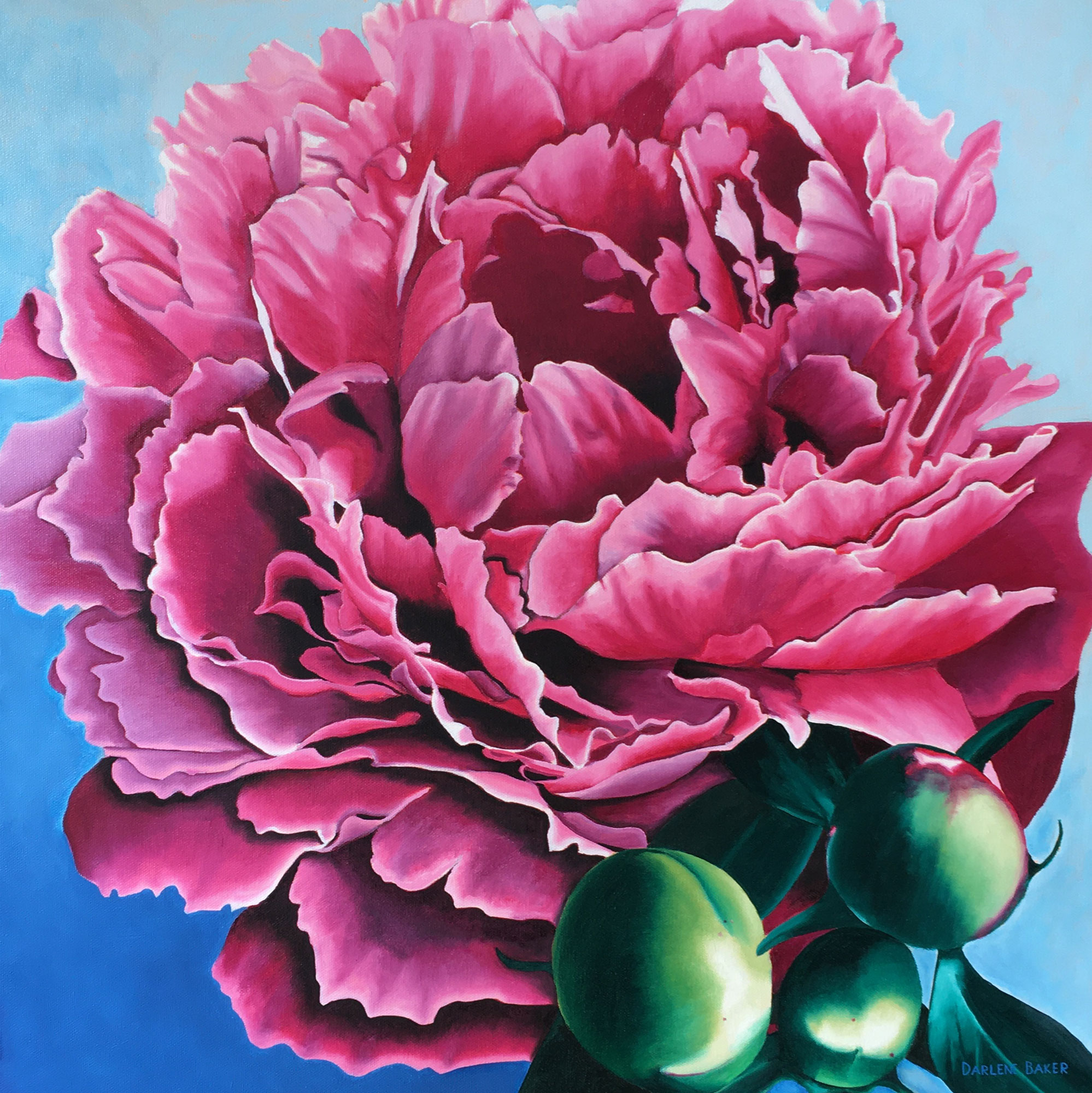 pink peony rose with 3 buds