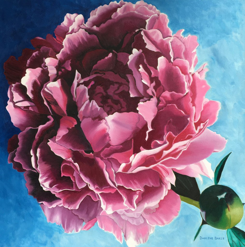 pink peony rose bloom and bud